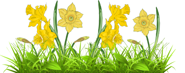 Daffodils-in-Grass.png